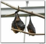 bats-10685-sm.JPG