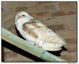 owl-10646-sm.JPG