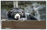 bear-10723-sm.JPG