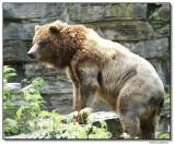 grizzly-10728-sm.JPG