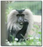 monkey-10831-sm.JPG