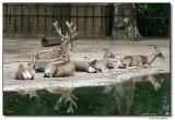 deer-10665-sm.JPG