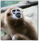 monkey2-10804-sm.JPG
