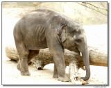 elephant2-10835-sm.JPG