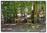 deer-1981-sm.JPG
