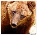 bear-1997-sm.JPG