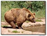 bear-1998-sm.JPG