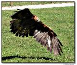 eagle-2035-sm.JPG