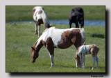 'The raggy colt  ...