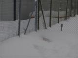 Ängla under the snow