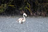 Rain Flamingo