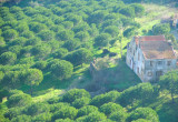 Pine tree farm