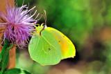 ZeissButterfly