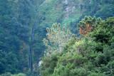 Madeira North