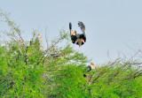 Stork Strecht