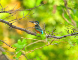 Kingfisher In Nature...