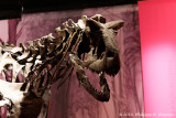 Gallery : :  A l'ombre des dinosaures