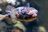 Paris - Aquarium tropical - Palais de la porte doree ::Gallery::