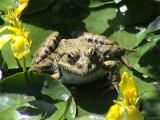 A frog in the Botanical Garden