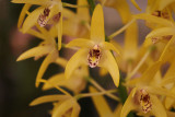 Very small orchids