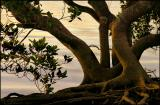 Nudgee-Beach