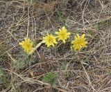 mongolian_wildflowers