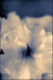 Image 61