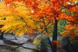 Autumn Vermont V