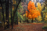 Autumn Leaves Arizona