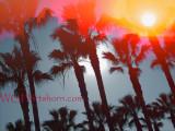L A Palms