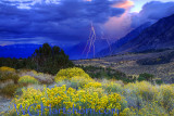 395 Thunderstorm