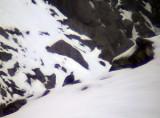 Kaukasisk snöhöna Caucasian Snowcock Tetrao caucacisus
