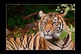 2010 - Toronto Zoo, Ontario - Canada