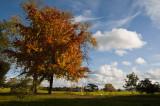 Autumn Croome