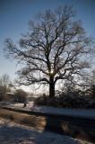 Work Tree
