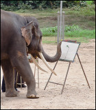 elephant artist.jpg