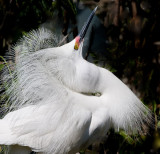 displaying egret .jpg