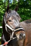 Hemma Hos Anette 1 Juni 2008