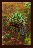 D701_1545_Flora.jpg