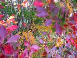 Hakone Oct 09