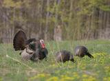 2006 Wild Turkey