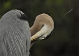 Heron Neck 2.8.jpg