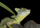 Lizards From Around the World