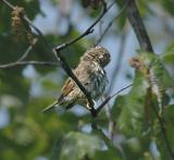 Warbler, Unidentified
