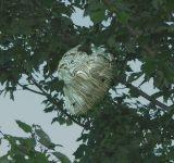 Bald-faced Hornet Pendant Nest