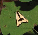 Clymene Moth (8107)