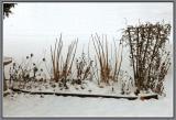 November 27 - Winter Garden