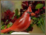 November 29 - Cardinalis cardinalis