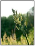 June 03 - Leaves of Grass
