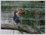 June 19 - Daffy